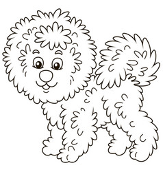 Curly bichon frise dog vector