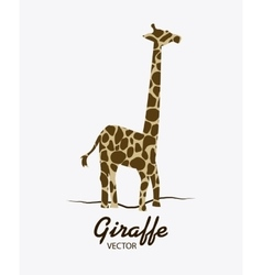 Giraffe icon Animal design Safari concept vector