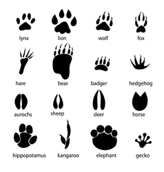 Set different animal tracks vector