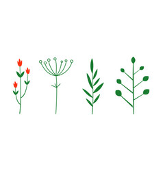 Spices and herbs set botanical plants vector