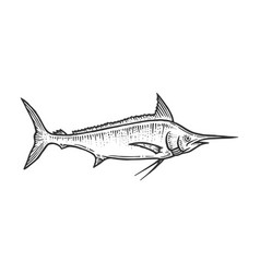 Swordfish marlin sketch engraving vector