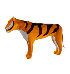 Tiger animal isolated vector