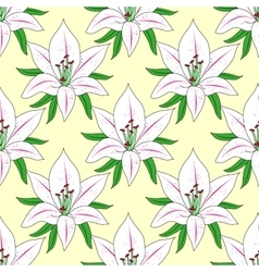 seamless background with flower Lily vector image