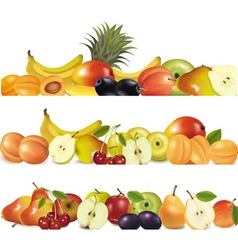 three fruit design borders vector image vector image