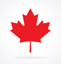 Maple leaf canada vector