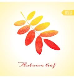 Autumn rowan leaf isolated element vector image