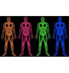 Male coloured bodies vector