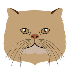 persian cat avatar cat breeds vector image