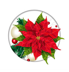 poinsettia christmas beautiful winter floral vector image