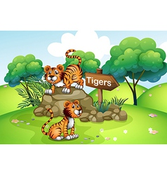 Tigers near the wooden arrow vector image vector image