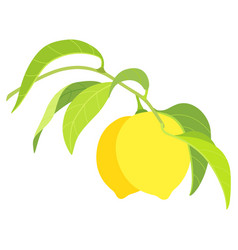 two lemons on branch isolated on white background vector image