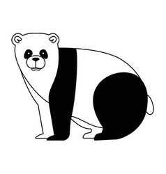 Wild bear panda icon vector
