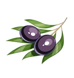 Pair of black olive vector image vector image