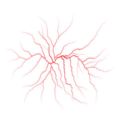 red veins blood vessels and arteries vector image