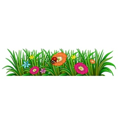A garden with a blooming flowers and a ladybug vector