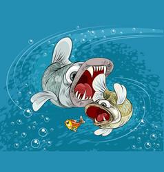 Predator fish in the sea vector