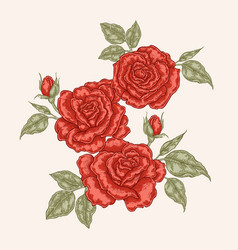 Red rose flowers and leaves in vintage style hand vector