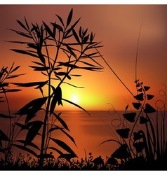 Sunset And Plants Silhouettes vector image vector image