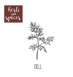 dill sketch hand drawing dill vector image vector image