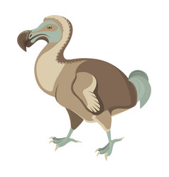 Big exotic dodo bird with short wings and fluffy vector