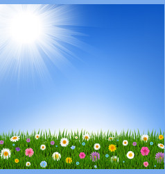 grass and flowers border and sky vector image