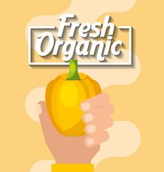 hand holding vegetable fresh organic yellow pepper vector image