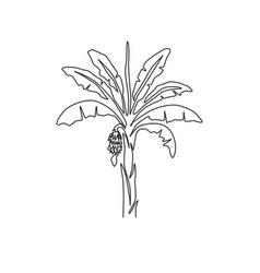 single one line drawing fertile and fresh banana vector image