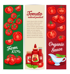 Tomato sauce design set banners vector