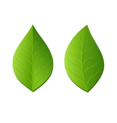 Two Green Leaves on White Background vector image