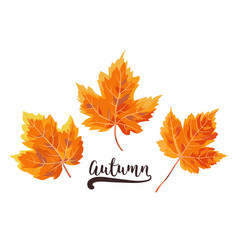 Autumn watercolor style seasonal card design with vector