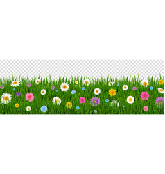 Green grass and flowers border transparent vector