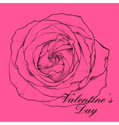 Valentines day design with rose vector image