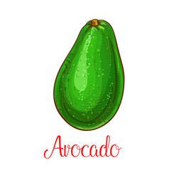 avocado sketch icon of tropical fruit vector image