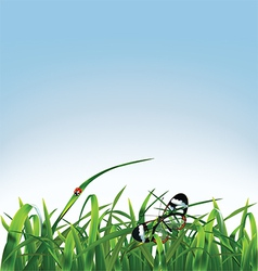 Grass butterfly and ladybug vector image