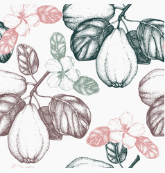 Quince vintage background vector