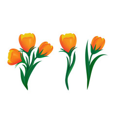 set blooming orange tulips with green leaves vector image