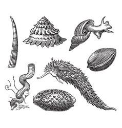 Vintage engraving gastropods vector