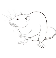 rat sketch vector image