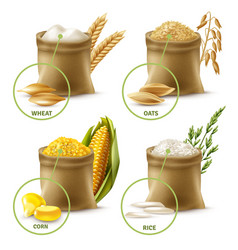 Agricultural cereals set vector