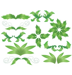 set of herbal decorative elements for design vector image