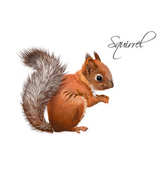 Squirrel realistic vector