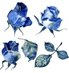 set of watercolor drawing roses vector image