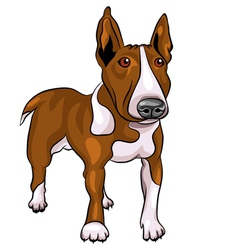 bull terrier dog vector image
