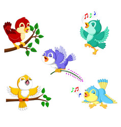 collection birds with the different color vector image