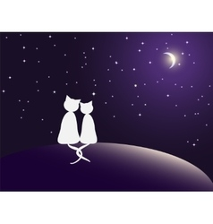 couple cats watching stars vector image