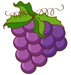Grapes with green vine on white background vector