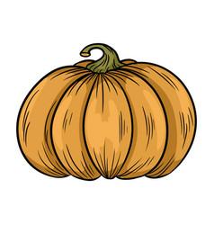 pumpkin autumn symbol vector image