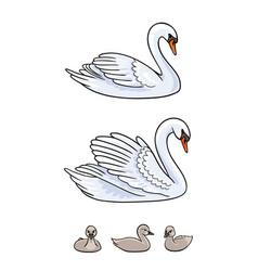 set swans - udult and babirds vector image