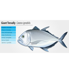 Giant trevally vector
