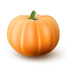 Realistic macro orange pumpkin isolated on white vector